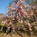 Frühling 2 verkl.