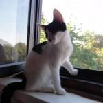 Katze 3 verkl.