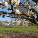 Frühling verkl.